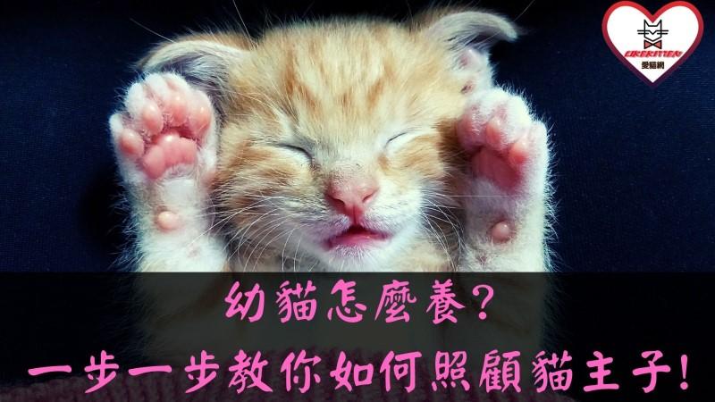幼貓怎麼養