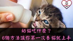 幼貓吃什麼