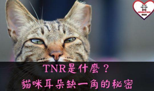 TNR是什麼