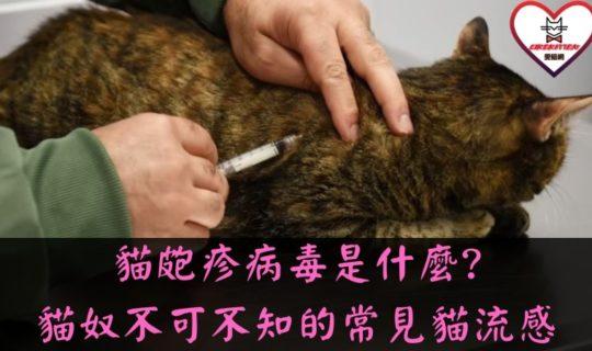 貓皰疹病毒