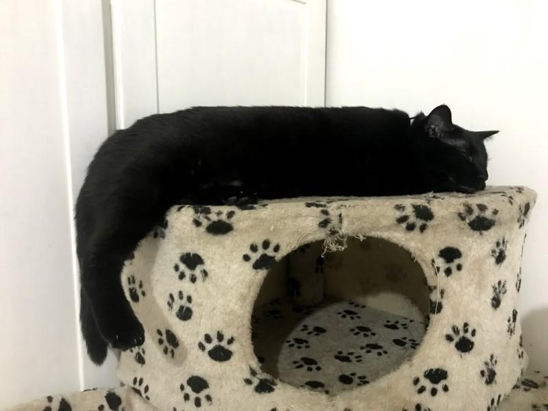 貓咪異食癖