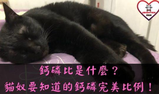 鈣磷比是什麼?貓奴一定要知道的鈣與磷完美比例!