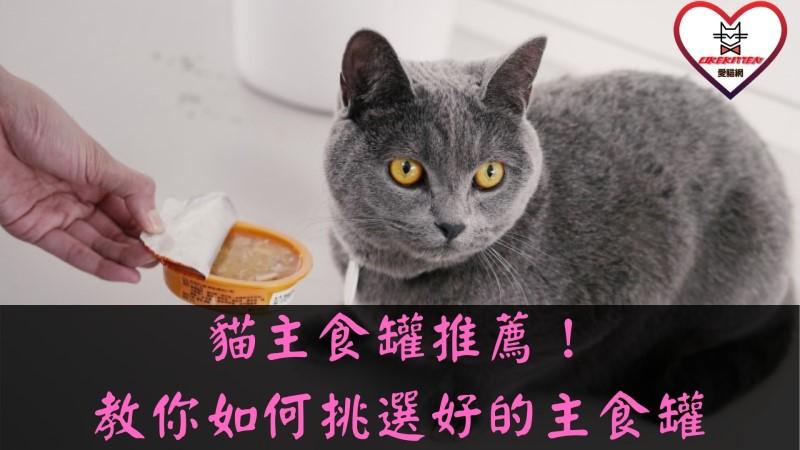 貓主食罐推薦
