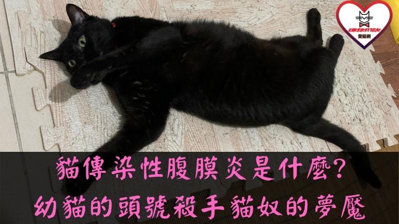 貓傳染性腹膜炎