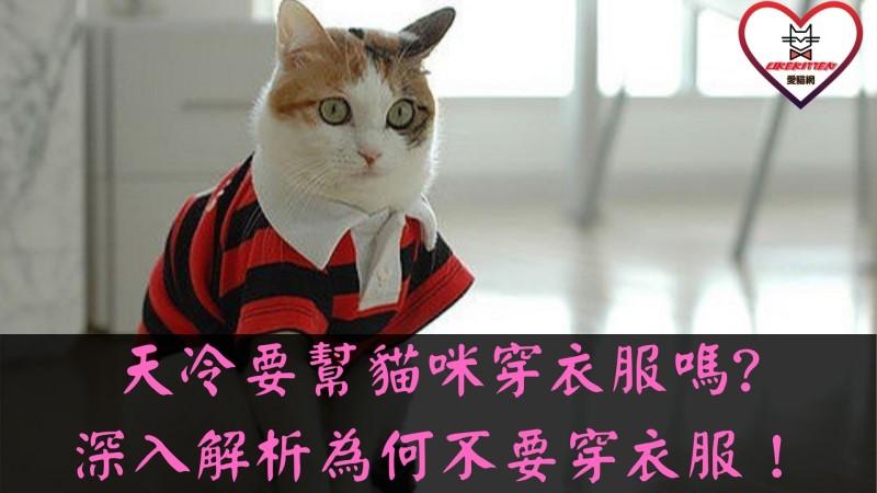 貓咪穿衣服