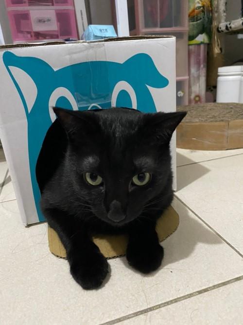 貓咪壓力大