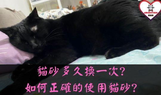貓砂多久換一次