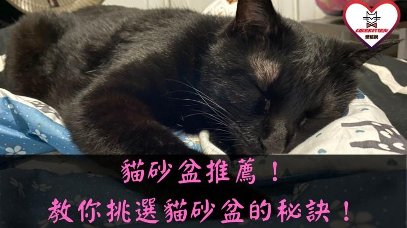 貓砂盆推薦
