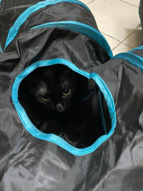 貓咪一直打噴嚏