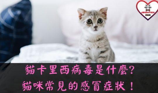 貓卡里西病毒
