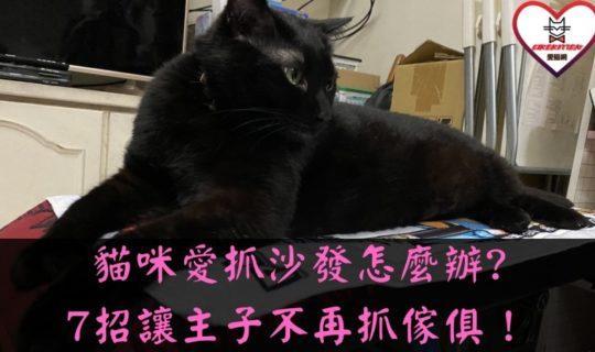 貓咪抓沙發怎麼辦