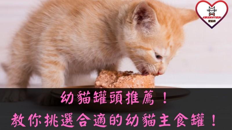 幼貓罐頭推薦